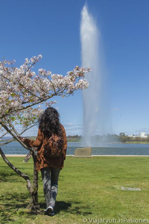 Fuente en el lago Burley Griffin en la visita en Canberra en Australia