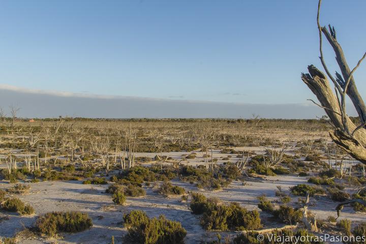 Típicos lagos salados cerca de la Wave Rock en el viaje a Perth y Western Australia