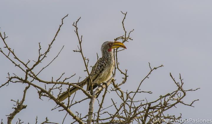 Precioso ave en el Parque Kruger en Sudáfrica