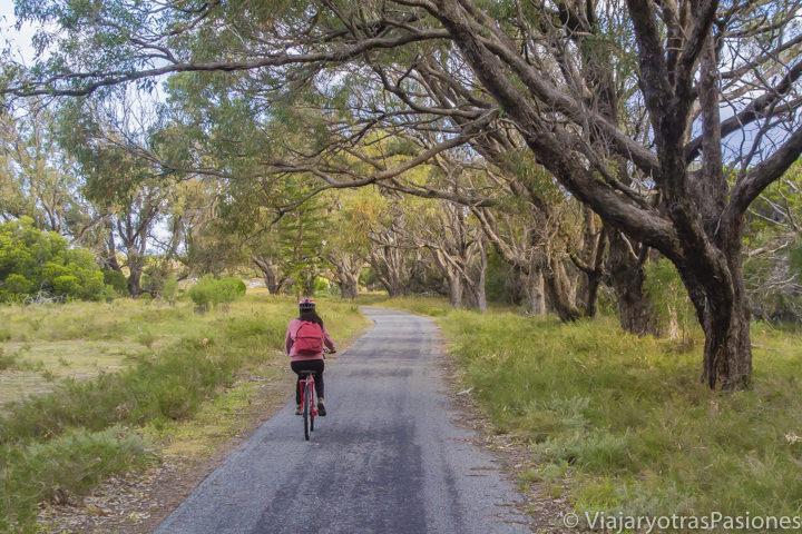 Andando en bici en Rottnest Island entre árboles en Western Australia