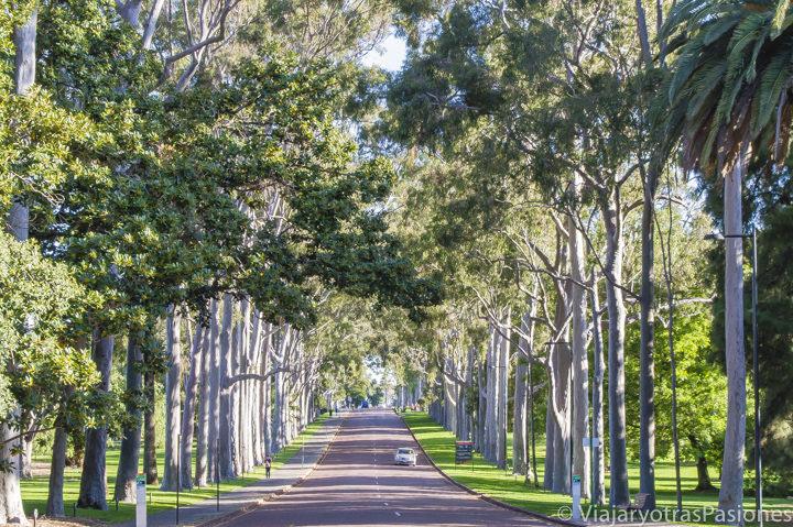 Carretera y arboles en el Kings Park en Perth en un día