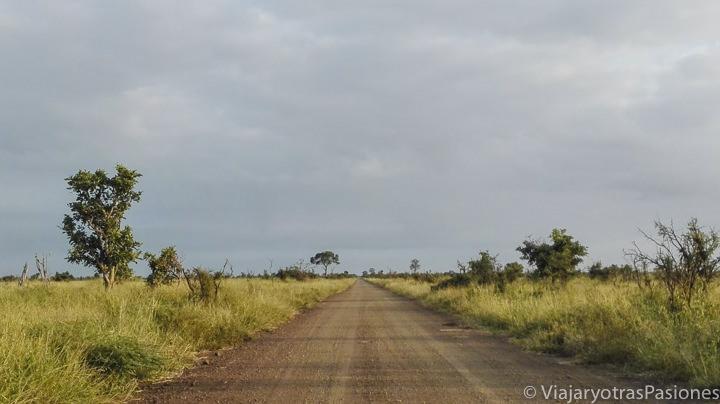 Preciosa carretera de tierra en el parque Kruger en Sudáfrica