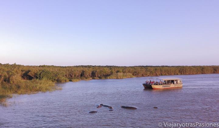 Paseo en barco viendo hipopótamos por el estuario de St.Lucia, en Sudáfrica