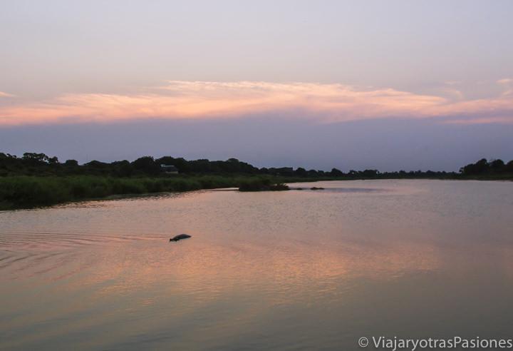 Atardecer cerca del campamento de Lower Sabie con un hipopótamo, Sudafrica