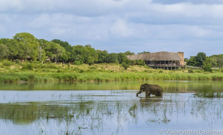 Elefante en el río Sabie en Sudáfrica