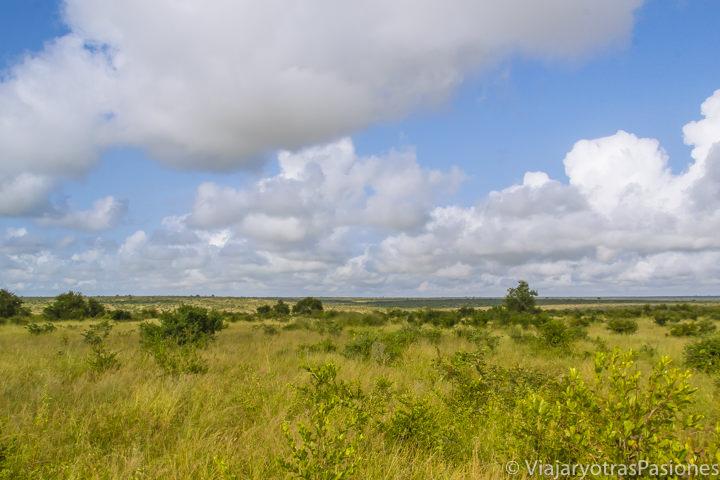 Típico panorama en el parque Kruger en Sudáfrica
