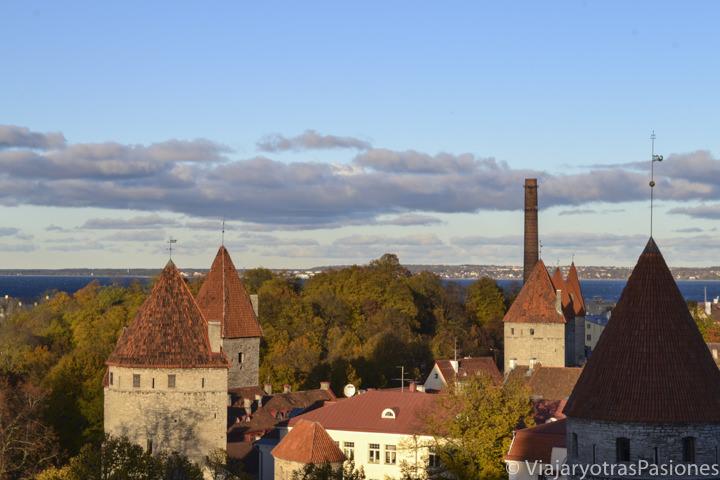 Techos rojos típicos en el casco histórico de Tallin en un día en Estonia
