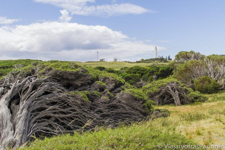 Faro y vegetación en Rottnest Island