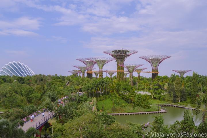 Panorámica de los famosos Gardens by the Bay en Singapur