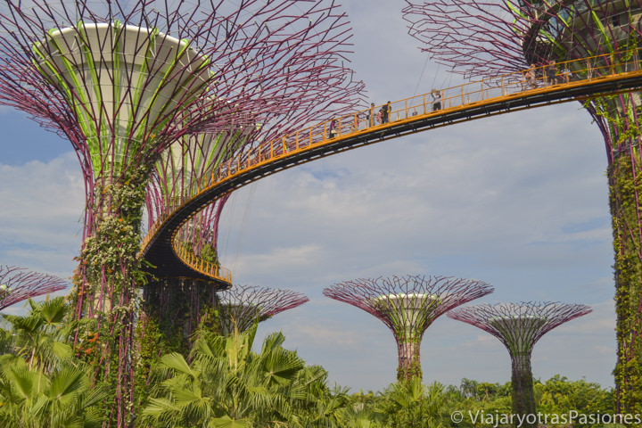 Skyway en los Garden by the Bay en Singapur en un día