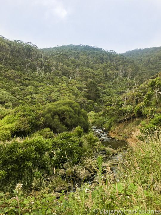 Espectacular vegetación que se puede ver en recorrer la Great Ocean Road en Australia