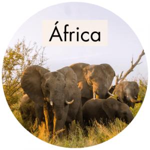 Manada de elefantes en el Kruger Park en Sudáfrica