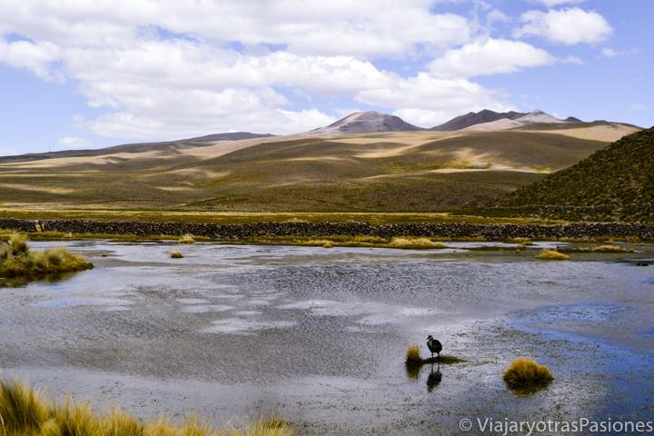 Lago de lado de la carretera para visitar el Cañón del Colca en Perú