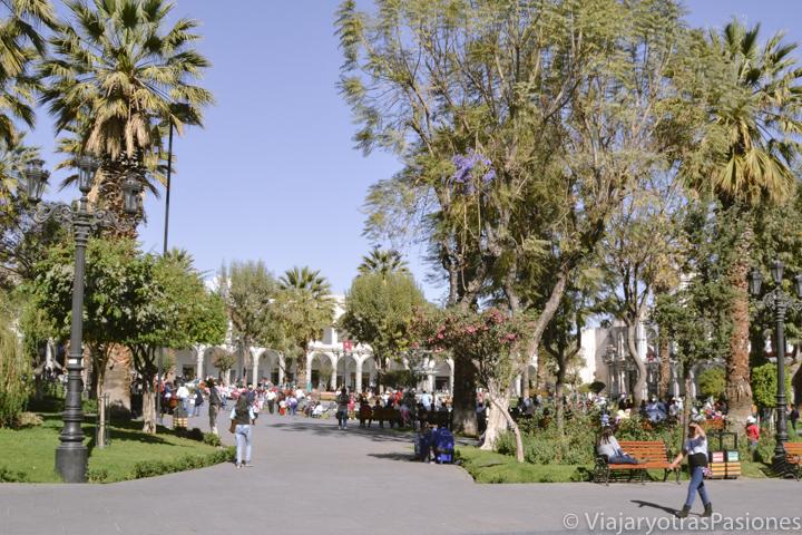 Arboles en la Plaza de Armas de Arequipa en Perú