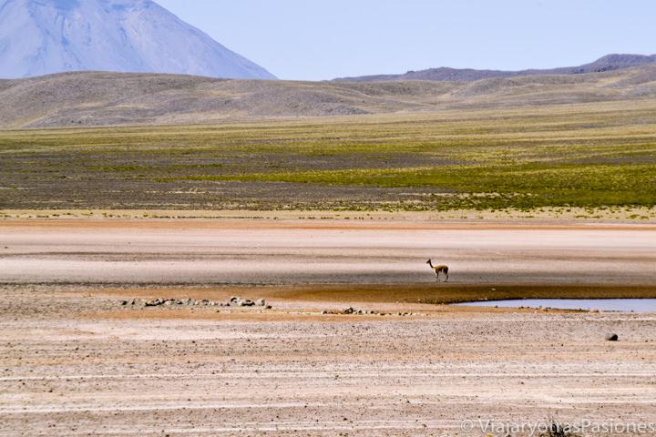 Impresionante vista de las Reserva de Salinas y Agua Blanca y volcán Misti en Perú