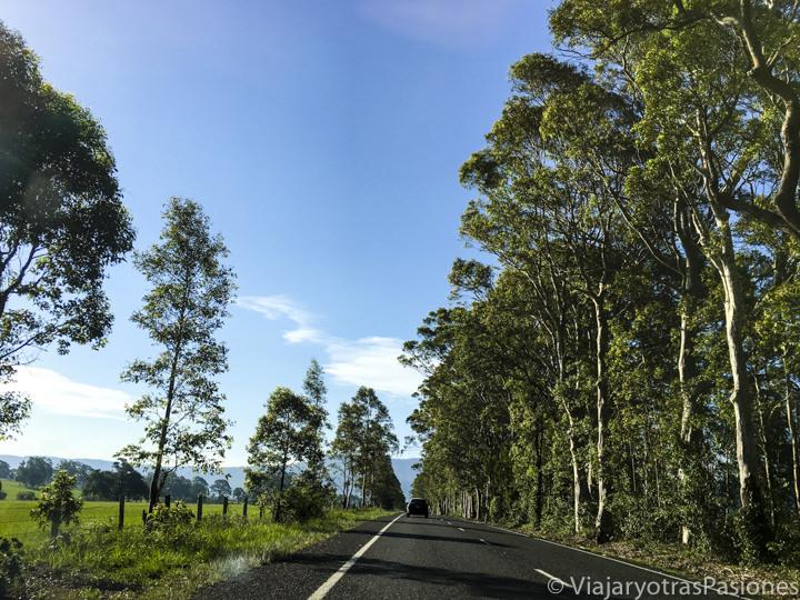 Carretera en el camino de Sydney a Jervis Bay, Australia