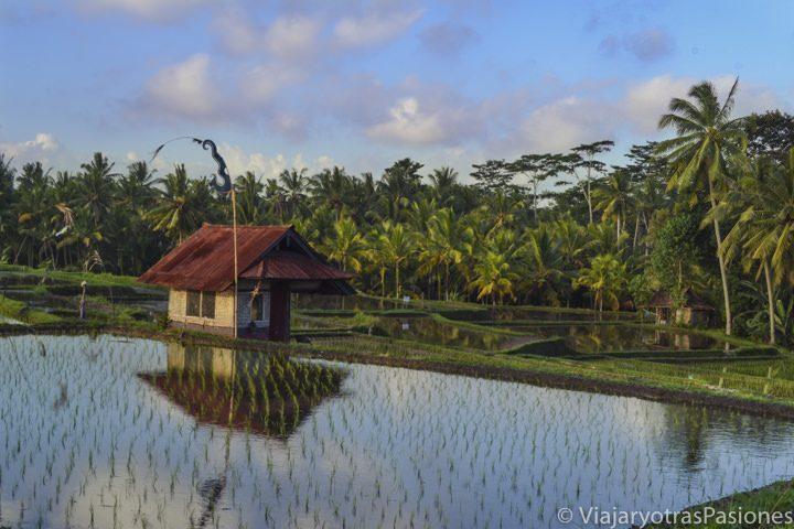 Maravilloso paisaje en los arrozales cerca de Ubud, en el viaje a Singapur y Bali