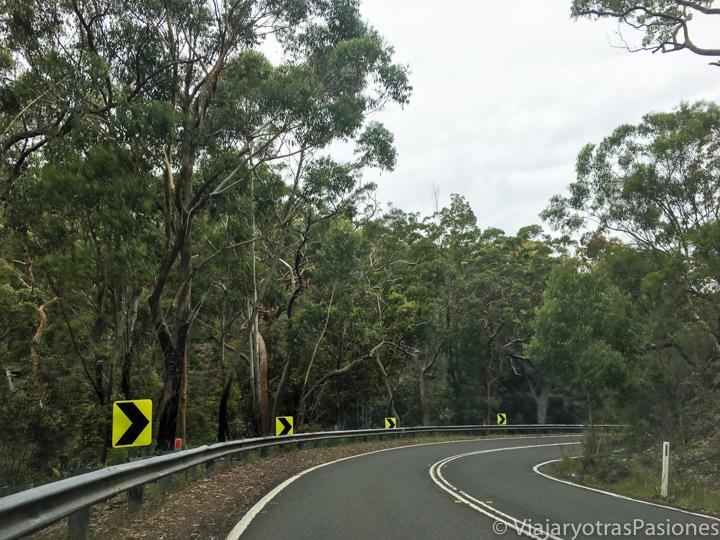 Carretera que cruza el bosque en el Royal National Park, en Australia