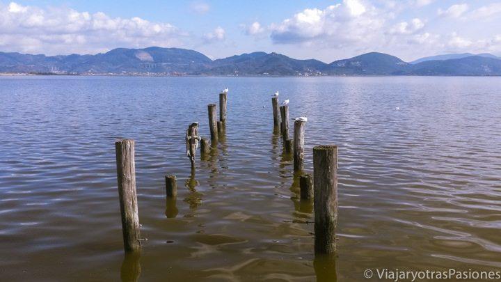Paisaje del famoso Lago di Massaciuccoli en Toscsna