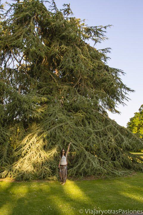 Árbol gigante en los Kew Gardens, en Londres