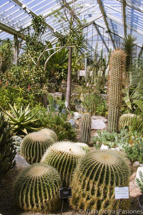 Grupo de cactus en el Kew Gardens en Londres, en Inglaterra