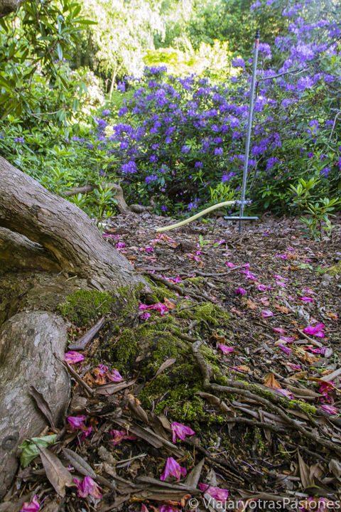 Bonitos flores en el bosque en Kew Garden, Londres