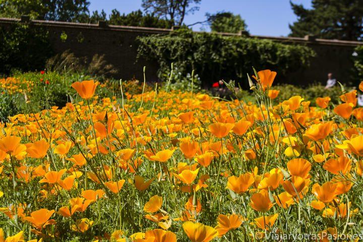 Preciosos flores en el Kew Gardens, en Londres