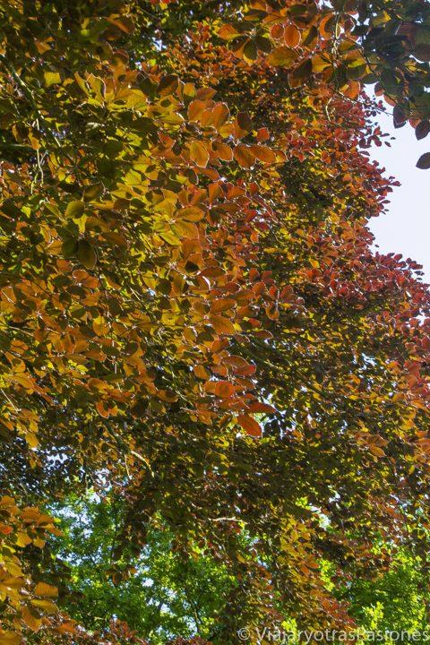 Bonito follaje en los Kew Gardens en Londres