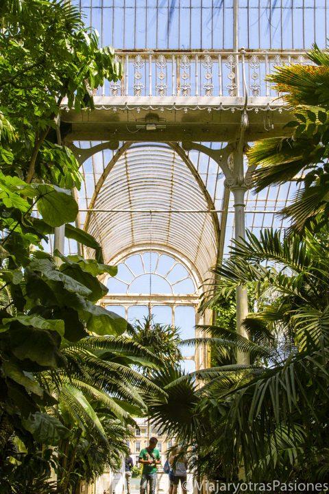 Espectacular techo de la Palm House en los Kew Gardens, Inglaterra