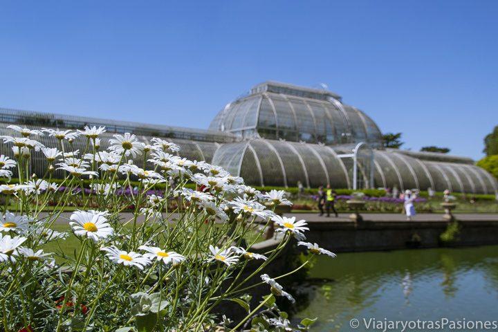 Panorama de la famosa Palm House en los Kew Gardens en Londres, Inglaterra