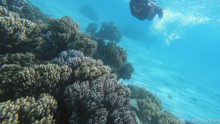 Haciendo snorkeling en la Gran Barrera de Coral en Cape Tribulation, Australia