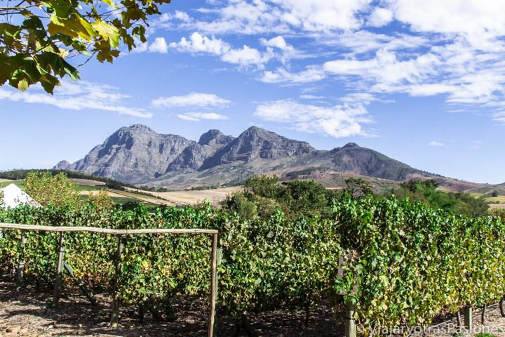 Espectacular panorámica de un viñedo en los Winelands, Sudáfrica