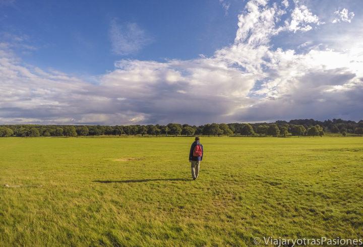 Enorme césped en el parque de Richmond en el sur de Londres, Inglaterra