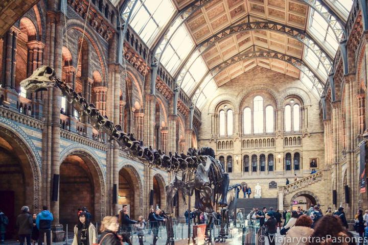 Espectacular entrada en el bonito Natural History Museum en Londres, Reino Unido