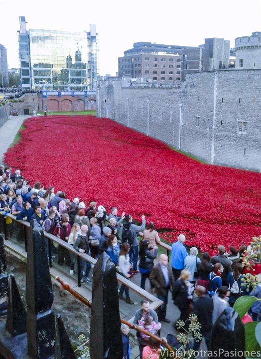 Increíbles panorama de típicas amapolas para conmemorar los caídos de la primera guerra mundial en Londres