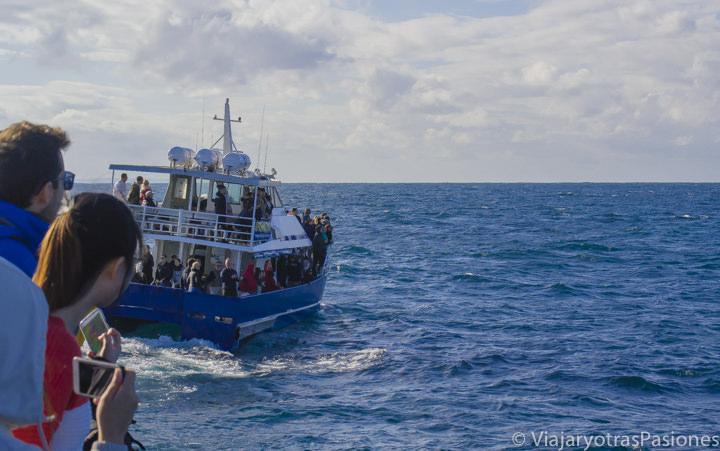 Imagen de los barcos para ver ballenas en Sydney, Australia