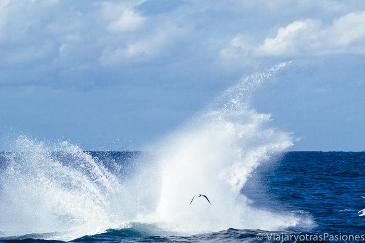 Espuma dejada de la ballena jorobada después de un salto, Sydney
