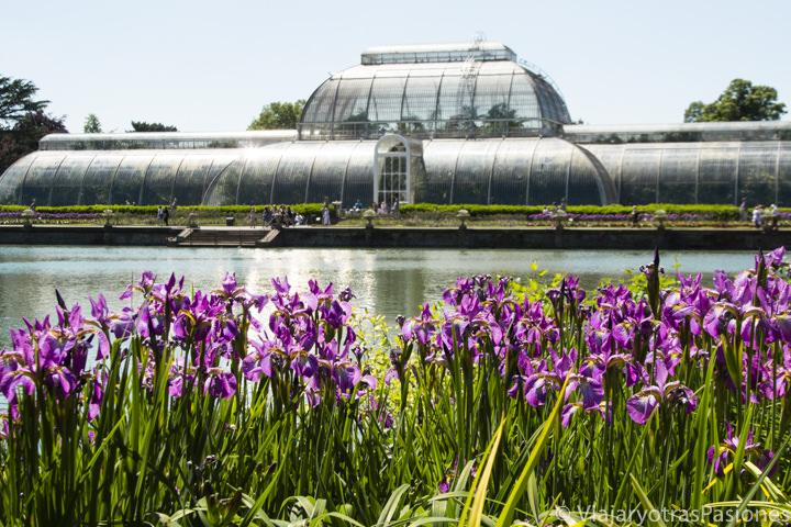 Bonito panorama de la Palm House en los jardines de Kew en Londres, Inglaterra