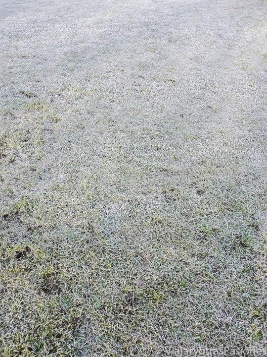 Césped lleno de escarcha en invierno en Londres, Inglaterra