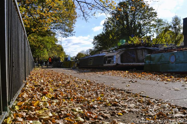 Hojas con colores otoñales en el parque de Victoria en Londres, Inglaterra
