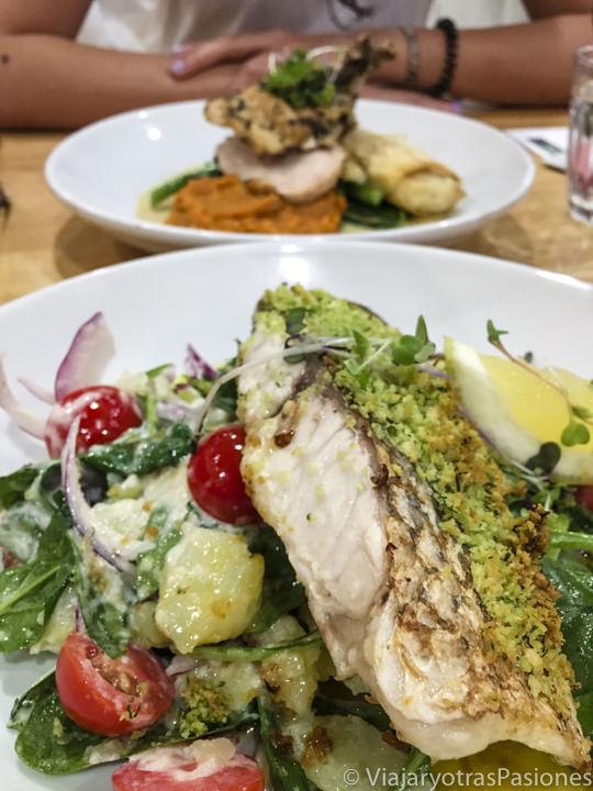 Delicioso plato de pescado barramundi, tipica comida de Australia