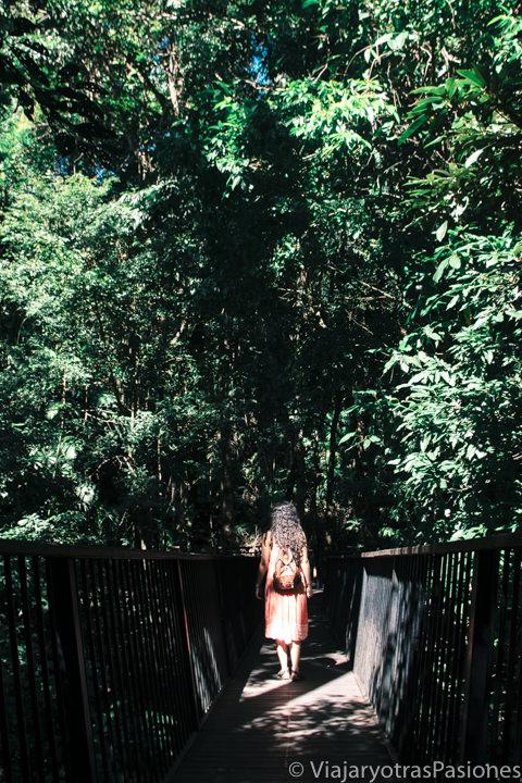 Camino para ir a las famosas Barron Falls en Kuranda, Australia
