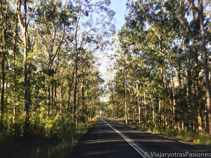 Típica carretera en la selva en Australia