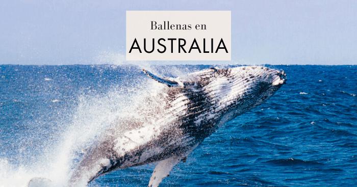 Ver ballenas en Australia: Cuándo, dónde y crucero en Sydney