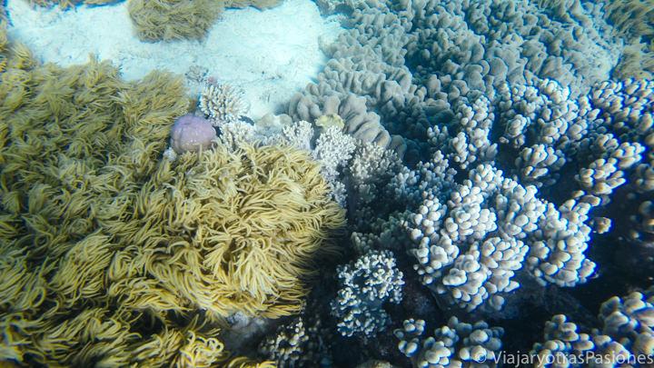 Espectacular imagen submarina en la Gran Barrera de Coral en Australia