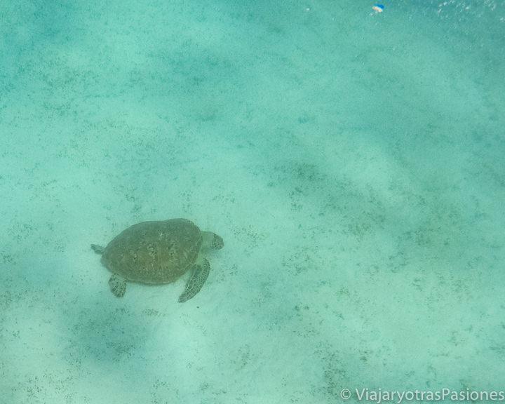 Imagen submarina de una tortuga marina en la Gran Barrera de Coral en Australia
