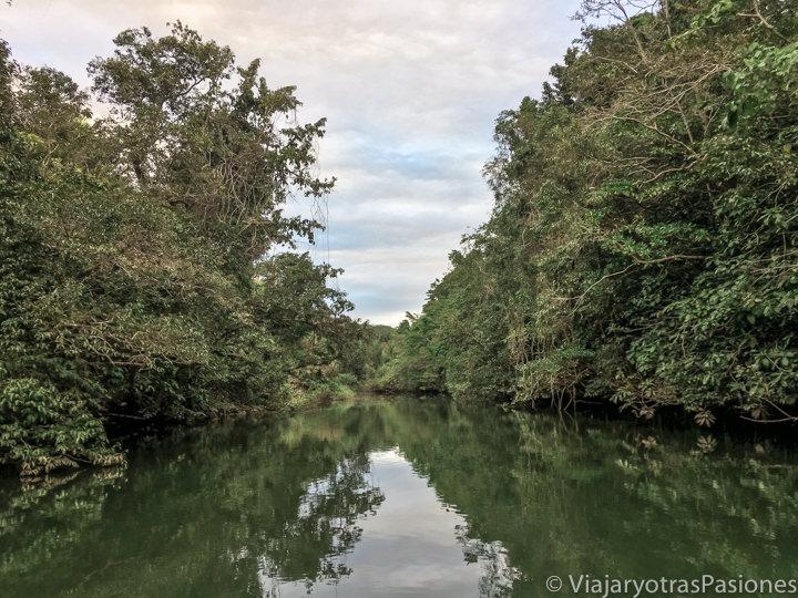Panorama del Daintree River en el norte tropical de Australia