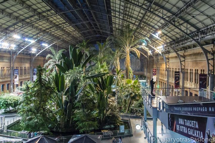 Panorama del jardín interior de la estación de Atocha, en Madrid