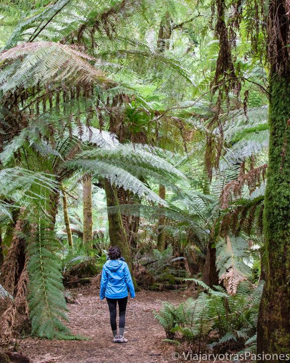 Increíble selva en la isla de Tasmania, Australia