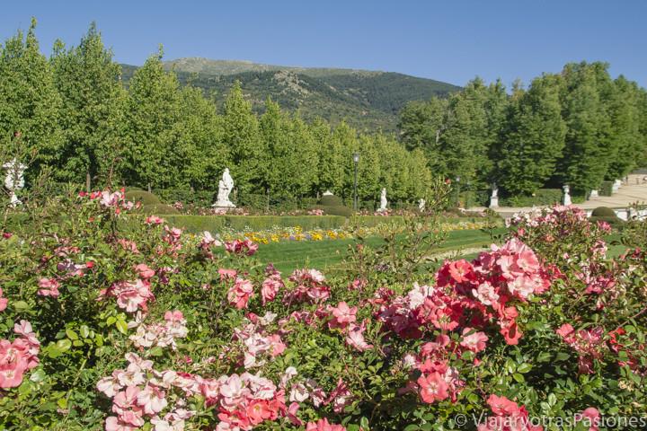 Imagen de bonitos flores en los jardines del Palacio Real de La Granja de San Ildefonso, España